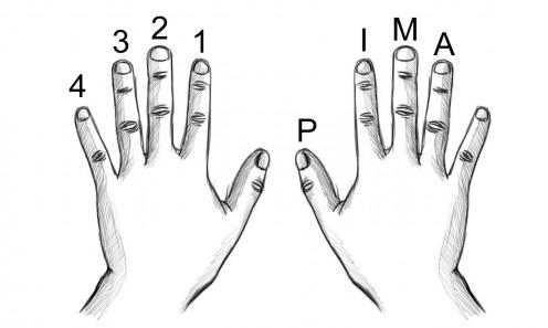 guitar-finger-tips_pima.jpg